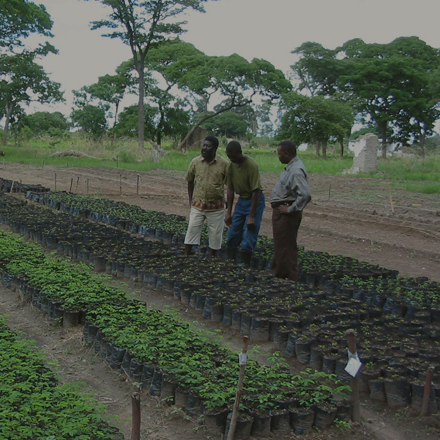 OurCompany > UniversalLeaf > Africa